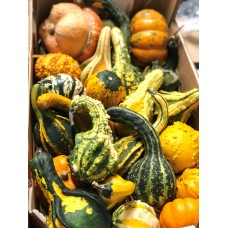 Box of Decorative Gourds NOT EDIBLE