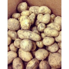 Jersey New Potatoes 500g